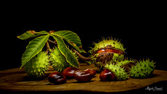 Chestnuts (Magda Banach) Tags: canon canon80d sigma150mmf28apomacrodghsm blackbackground board brown chestnuts colors flora green leaves macro nature plants spikes