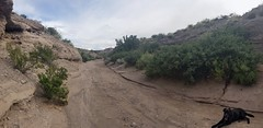 20180903_Erik in Solitude Canyon (JoelDeluxe) Tags: solitudecanyon bosquedelapache national wildlife refuge newmexico nm canyontrail socorrocounty route1 hiking trail joeldeluxe