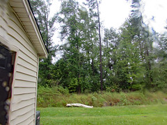 Backyard Of The Apartment Complex. (dccradio) Tags: lumberton nc northcarolina robesoncounty outdoor outdoors outside storm hurricane hurricaneflorence florence friday afternoon latesummer earlyautumn earlyfall weather rain rainy raining windy gusty debris stormdebris grass lawn greenery tallgrass tallweeds weeds ground yard tree trees foliage treebranch branch branches treebranches canon powershot sx510hs bridgecamera