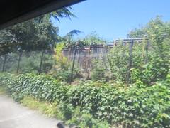 IMG_8298 (Andy E. Nystrom) Tags: bellevue washington wa bellevuewashington