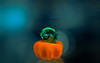 teeny tiny pumpkin (Dotsy McCurly) Tags: happysmileonsaturday miniinminimalism minimalistic minimal teeny tiny pumpkin blownglass art canoneos80d efs35mmf28macroisstm smileonsaturday