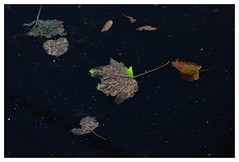 Death of leaves (haidem3) Tags: autumn leaves autumnleaves water puddle nature