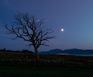 Arran with Tree, Moonlight »