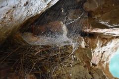 DSC_5574 (griecocathy) Tags: macro grotte roche nid toile araignée gouttelette eau paille éclat beige