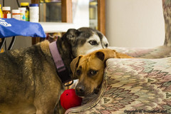 Koko & Piper (fishmonger45) Tags: photoshop photomatix dogs hdraddicted hdr hdrphotomatix hss greatphotographers
