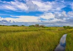 Ocracoke Marsh (dianne_stankiewicz) Tags: marsh coastal ocracoke nature landscape water clouds