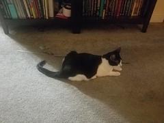20180807_064150 (sobca) Tags: cat kottur kitte eesa miu kat pussi kato chat katze popoki gatto chatool billi felis cattus gato katt meo кошка बिल्ली 猫 γάτα vighro ᏪᏌחתול