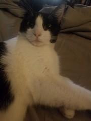 20180807_064001 (sobca) Tags: cat kottur kitte eesa miu kat pussi kato chat katze popoki gatto chatool billi felis cattus gato katt meo кошка बिल्ली 猫 γάτα vighro ᏪᏌחתול