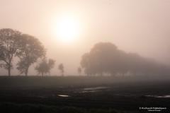 2017-09 Dichte mist bij zonsopkomst in de polder - Zwartewaal/NL (Meteo Hellevoetsluis) Tags: 0919 2017 aboutpixels autumnseason herfstseizoen holland mnd09 nikond7200 nl nederland netherlands nikon voorneputten zuidholland zwartewaal air begroeiing collecties fog geografie geography landscape landschap lucht luchtvochtigheid meteo meteorologie meteorology mist nature natuur polder september sky sunsets vegetation weather weer zon zonsopkomst