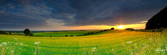 JHG_GFX50s-6643-Pano-2.jpg (Julian Gazzard) Tags: horizon sunny natural england sunbeams nature cheesefoot rapeseed agriculture trees plant cheesefoothead panoramic tree way alone farm isolated yellow uk wheat cloudscape sunset azure cobalt flower flare sunbeam green rural evening beauty harvest golden countryside red food scenery sun environment cloud landscape hampshire downs farming winchester crop summer field