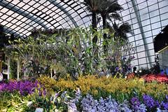 Orchid Extravanganza (chooyutshing) Tags: flower orchid orchidextravaganza floraldisplay flowerdome gardensbythebay baysouth marinabay singapore