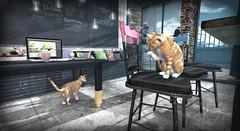 Bakery Cats (Loegan Magic) Tags: secondlife cats cat feline bakery shadow sunshine chairs laptop pastries window