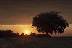 Sunset at the Ruhr river | Germany (*Photofreaks*) Tags: sunset sonnenuntergang dusk abenddämmerung ruhr ruhrgebiet essen mülheim germany deutschland nrw nordrheinwestfalen northrhinewestphalia tree baum solitaire silhouette sky himmel clouds wolken horizon horizont wwwphotofreakseu adengs landscape landschaft