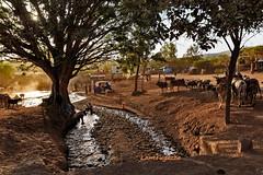 IMG_2992-PS (Gabrylam) Tags: africa etiopia portrait landscape etnie tribes