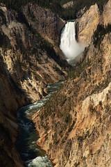 Lower Falls, Grand Canyon of Yellowstone (Reggie Root) Tags: yellowstonenationalpark lowerfalls artistpoint crosscountrytrip2018