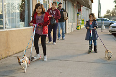 Done with shopping and full speed ahead (radargeek) Tags: ca california 2018 march salida chihuahua dog kid child girls children scooter parents playing shopping