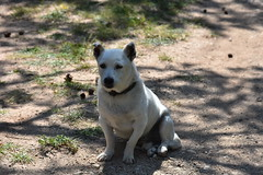 Ochi en la sombrita (esta_ahi) Tags: tarragona ochi perro gos dog arbolí baixcamp spain españa испания