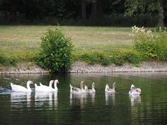 Clingendael (M_Strasser) Tags: clingendael olympus olympusomdem1 holland netherlands