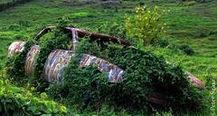 Broken and reclaimed (Peter Szasz) Tags: car landscape nature out burned broken reclaim maui hawaii hillside green rust vehicle graffitied upcountry paint growth bush