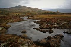mot svergjesjøhøa sør (KvikneFoto) Tags: nikon1j2 landskap høst autumn norge