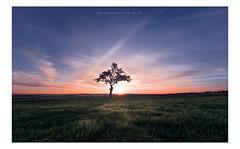 Wake up ... (Markus1224) Tags: baum tree schwäbische alb swabian gegenlicht backlight nikon sonnenaufgang sunrise germany badenwürttemberg himmel landschaft sky clouds d750 minimalism herbst autmn fall sun sonne