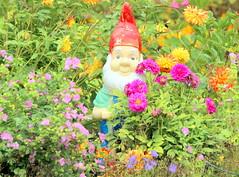 The garden gnome (irio.jyske) Tags: park garden yard backyard colorful color flowers plants bushes nice beautiful beauty nature naturephoto naturepictures naturephotograph naturepic naturescape naturephotos naturephotographer naturepics natural flowerpic flowerphotograph flowerphoto flowerphotographer flower flowerphotos