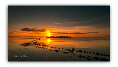 Fly Away Birdie (RonnieLMills 5 Million Views. Thank You All :)) Tags: stone causeway path leading line high tide strangford lough rough island islandhill sunrise early morning dawn sun up reflections water warm colours lone bird flyawaybirdie ronnielmills goldcollection
