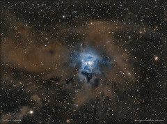 NGC7023 - Iris Nebula (francesco.battistella) Tags: astrophotography astronomy astroatlas space qhyccd qhy9 qhy168c optolong filters lpro uhc ngc7023 iris nebula ccd cmos deep sky image telescope universe