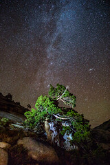 Andromeda Galaxy, Olmsted Point (optimalfocusphotography) Tags: northerncalifornia california usa landscape yosemite nationalpark nature stars astrophotography yosemitenp nightphotography lightpainting tree night yosemitenationalpark