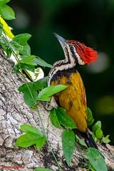 D850-3148 (yowstanley) Tags: nikon nature tree bird d850 200500mm garden