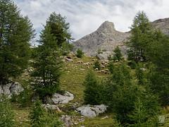 2018-09-16_9161716 © Sylvain Collet_DxO.jpg (sylvain.collet) Tags: mountains alpesdehauteprovence france wild montagne colmarslesalpes lacdallos nature
