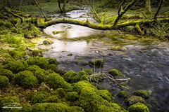 Malham/Gordale Scar - Yorkshire Dales (Aron Radford Photography) Tags: malham gordale scar janet foss yorkshire dales