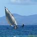 Pirogue malgache - Nosy be - MADAGASCAR