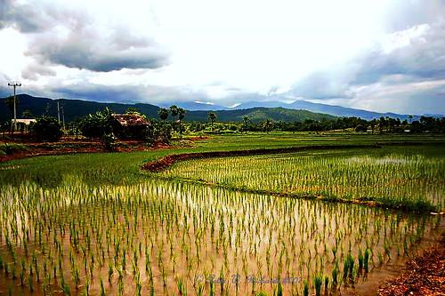 Chiang Mai Province.