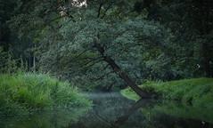 27.08.2018 (Kosmi88) Tags: nikon polsnd polska głowno las rzeka river woda water nature green natura lato summer