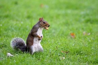 More nuts there!........