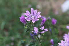 2018-09-02_03-44-05 (Ewers M.) Tags: blumen flowers blüten blossom natur nature makroaufnahme makro macro canon canoneos1300d unterwegs ontheway