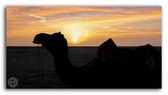 To travel is worth any cost or sacrifice! (FotographyKS!) Tags: rannofkutch kutch salt landscape beautiful calm colorful desert lake nature outdoors scene camel ride tourism tourist wheel scenic season serenity summer travel water cracks earth land crust dirt patterns saltpans texture saltylandscape whitedesert thardesert gulfofkutch background beach leisure outdoor sunset dawn parchedland dusk sunrise clouds gujarat india dark