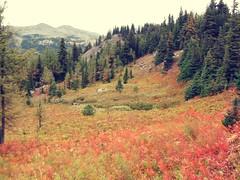 Banff Alberta Alpines (Mr. Happy Face - Peace :)) Tags: fall autumn banff alberta canada larchforest september canadaparks albertabound cans2s nature hiking exploring rockymountains alpinemeadows sunshinevillage sunshinemeadows art2018 fleursetpaysages lagaleriedelucie