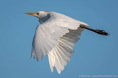 DSC_9322 (dwhart24) Tags: orlando wetlands park nikon d500 david hart nature animals 200500 tc 14