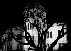 Genbaku Dome (balazsi design) Tags: genbaku japan nuclear atomic bomb ruin war first attack tree shadow branches silhouette second world america united states killed radiation peace memorial black white cracks decay japanese hiroshima