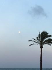 Cullera (Valencia) (MarisaTárraga) Tags: españa spain valencia cullera playa beach cielo heaven luna moon arbol tree palmera iphone6s