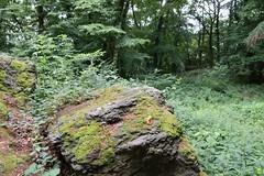 Ducky on a stone (petrOlly) Tags: europe europa germany deutschland koenigsberg königssberg drachenburg stone stones nature natura przyroda