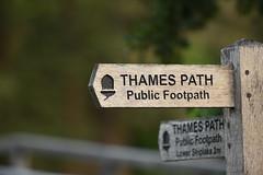 Thames Path Sign (rq uk) Tags: rquk nikon d750 nikond750 afsnikkor70200mmf28efledvr afsteleconvertertc14eiii henleyonthames thamespath typeface acorn sign henley week37201852weeksin2018weekstartingmondayseptember102018