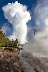 Steamboat Geyser eruption and outflow channel (YellowstoneNPS) Tags: norrisgeyserbasin steamboatgeyser ynp yellowstone yellowstonenationalpark eruption geyser