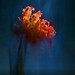 September Flower 4
