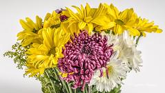 A Bouquet (augphoto) Tags: augphotoimagery bouquet color flowers stilllife studio tabletop unitedstates