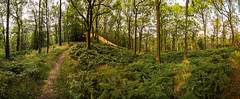 Fake Summer Lights (gabormatesz) Tags: canon 1018mm wideangle landscape forest tree trees travel panorama panoramaexperience green england unitedkingdom lakedistrict
