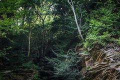 Sandstone gully (r3d.rav3n) Tags: sarver pennsylvania unitedstates us