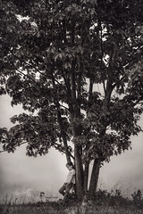The Thinking Tree (Shannon Alexander Photography) Tags: blackandwhite bw childphotographer vermontphotographer tree nature child dramatic moody vermont canon 7020028